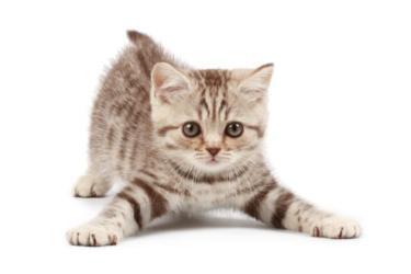 Запор у кота (кошки), что делать?