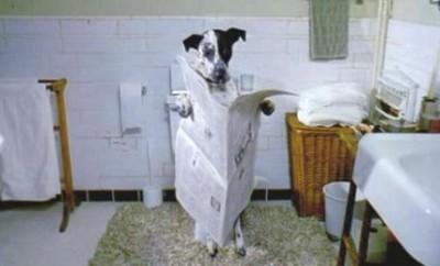 Что делать, у собаки понос?