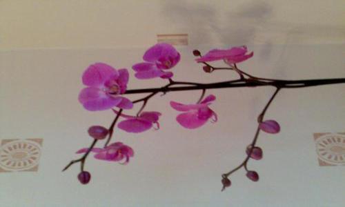Отцвела орхидея, что делать дальше с ней?
