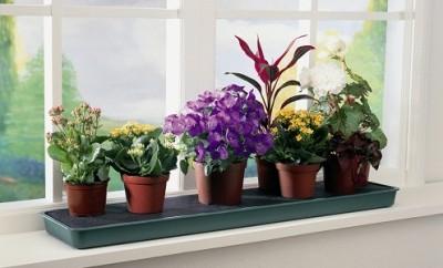 Какие растения должны быть в доме